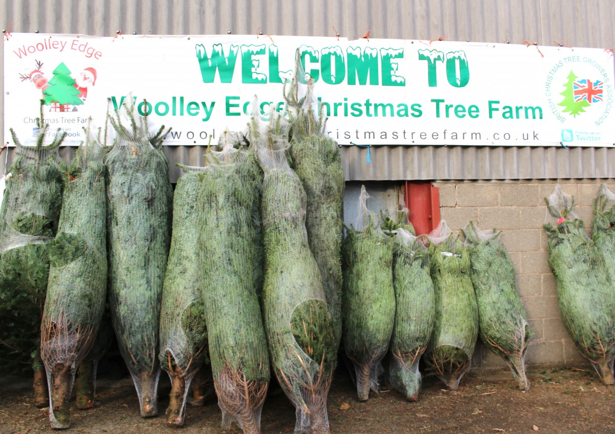 Christmas Tree Picking | Woolley Edge Farm
